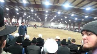 Heart of America Dutch Harness Horse Sale