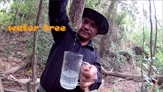 how to find water in the wild | water tree