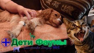 Лечение энтерита у собак. Советы ветеринара(Привет друзья, рассказываю по какой схеме я лечу энтерит у собак. Говорю о принципах лечения, а также называ..., 2016-07-19T19:27:16.000Z)