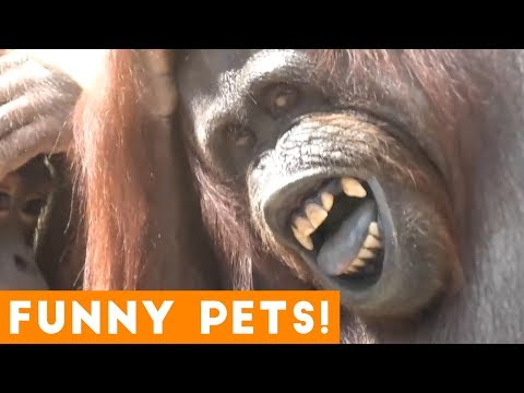 Funniest Pets & Animals of the Week Compilation September 2018   Funny Pet Videos