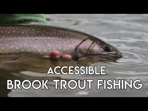 Accessible Brook Trout Fishing | Rivers & Lakes