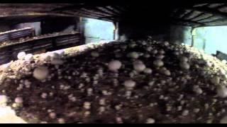 L'Actu – Les dernières champignonnières