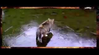 Смотреть Прикольные кошки ловят рыбу.