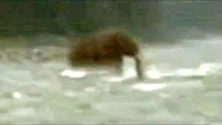 Criaturas Prehistoricas Captadas En Video | Dinosaurios Captados En Video