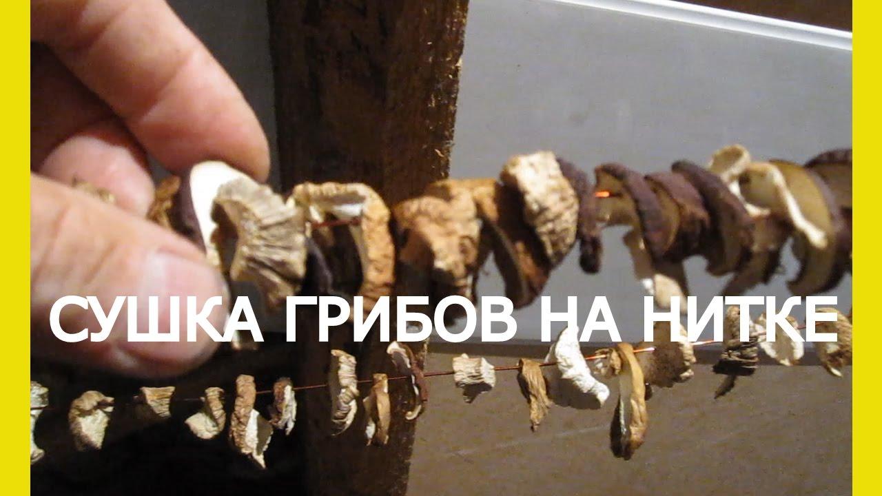 Сушилка для грибов над газовой плитой своими руками фото 553