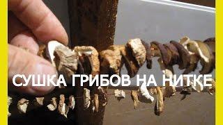 Сушка белых грибов. Как сушить грибы дома.Как сушить грибы на зиму.Сушка грибов в домашних условиях