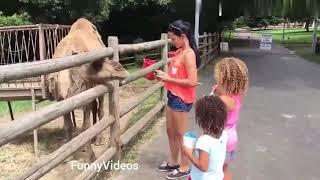 Funny Animals Videos funny zoo Animals