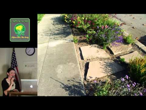 Grey to Green: Native Plants in Parking Strips and Side Yards, a talk by Carrie Jensen