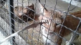 видео Купить саженцы в Полтаве и Полтавской области