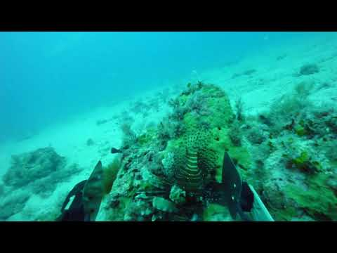 Lionfish-Hunting Robot