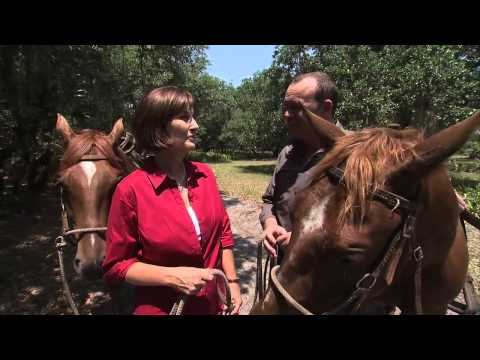Cattle and Conservation - America's Heartland