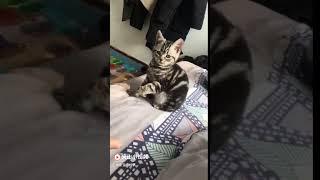Huấn Luyện Mèo Làm Theo Ý Mình