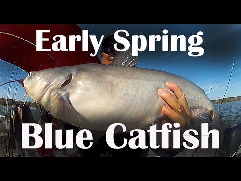 Video Spring catfish bait