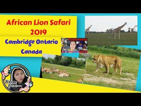 African Lion Safari Ontario Canada 2019