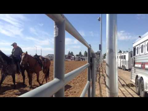 Rodeo Road With Fallon Taylor Logandale Nv Dynastyhorses Com