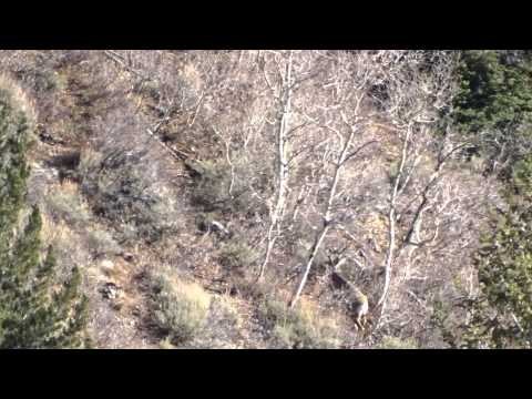 wasatch front 2014 big buck
