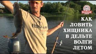 Рыбалка в Астрахани - июль.