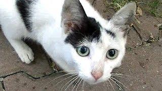うーうー威嚇しながら、うまうま言って食べる子猫