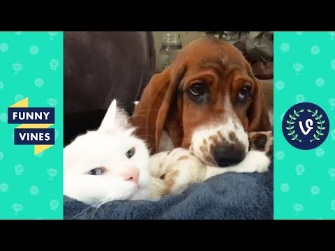 TRY NOT TO LAUGH - Cute PETS & ANIMALS | Funny Videos October 2018