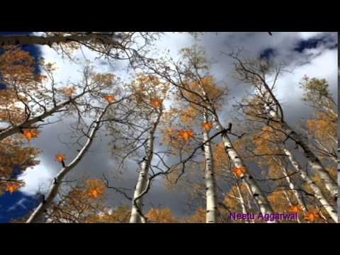 Welcome fall season greetings with beautiful trees and falling welcome fall season greetings with beautiful trees and falling colourfulgoldenleaves youtube m4hsunfo Image collections