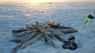 ЖОР Щуки в ГЛУХОЗИМЬЕ Жерлицы срабатывают по ЧЕТЫРЕ подряд Рыбалка в заповеднике
