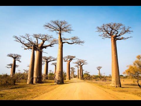 Madagascar 2016
