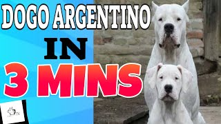 DOGO ARGENTINO in 3 Minutes (2021)! In Short about the Dogo Argentino Dog Breed!