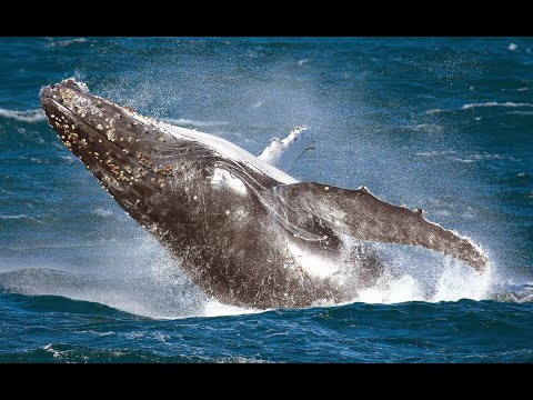 Sydney Premium Whale Watching Cruise And Sydney Private Tour