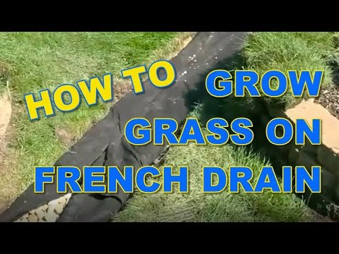 How to Grow Grass on a French Drain Yard Drain