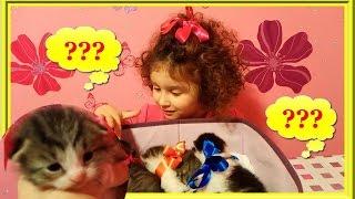 🍫 Конкурс на лучшее имя котенку - итоги. Кто получит шоколадку?!