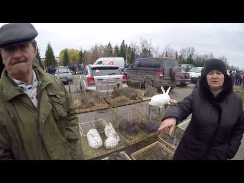 Ярмарка кроликов, голубей и домашней птицы Орел