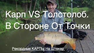 Карп vs Толстолоб.  Рекордные КАРПЫ На Штекер