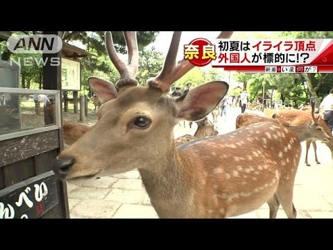 凶暴でも「シカ」らないで・・・正しい鹿との付き合い方(16/06/06)