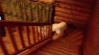 犬たちもフリーで一緒に泊まれるコテージです。 三重県の青山町にある、...