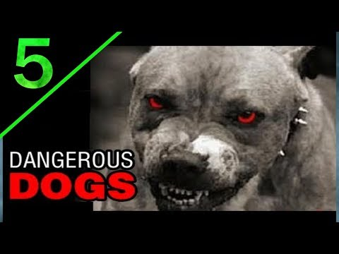 Top 5 most dangerous dogs breed in the world | Telugu | Taju logics