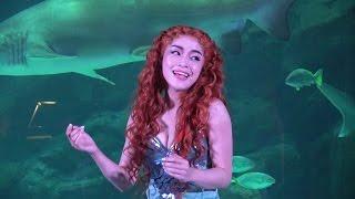 劇団四季の人気ミュージカル「リトルマーメイド」。その主人公の人魚姫...