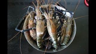 How To Clean Jumbo Tiger Prawns | Fish Cleaning Video | Tips & Tricks