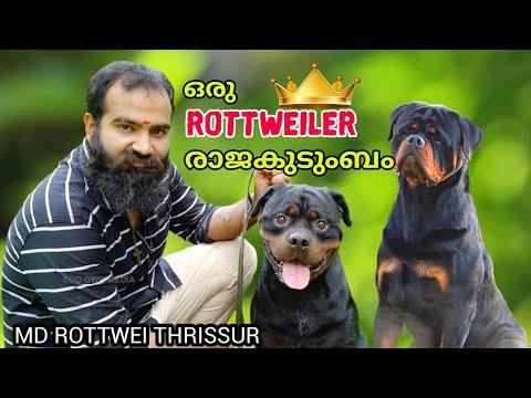 മനോജ് ചേട്ടന്റെ Rottweiler കൊട്ടാരം | MIRKOFU-SA-DJO