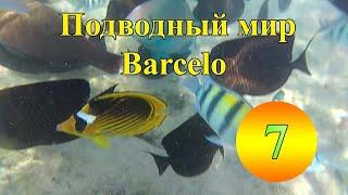Подводный мир Египта анимация фаер шоу 2019 Barcelo Tiran Sharm 5 Шарм Эль Шейх Египет