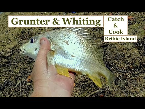 WHITING And GRUNTER Catch And Cook, Fishing Bribie Island