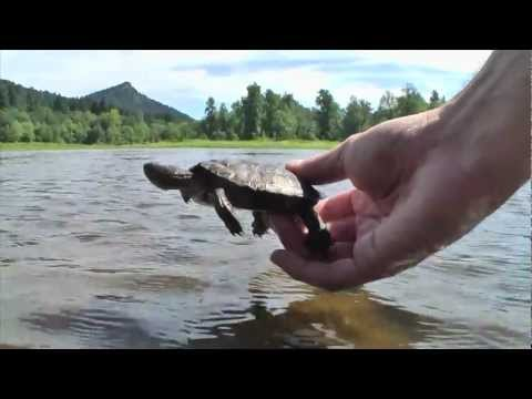 Western Pond Turtle Conservation