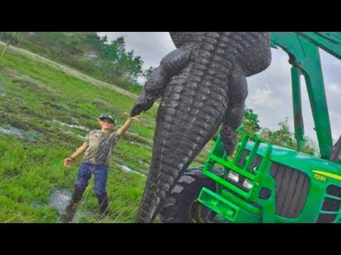 15 LARGEST Crocodiles
