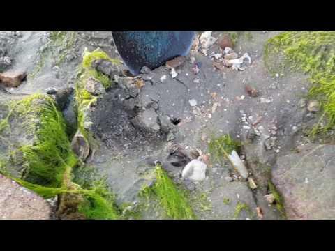 개조개(대합)캐는 영상