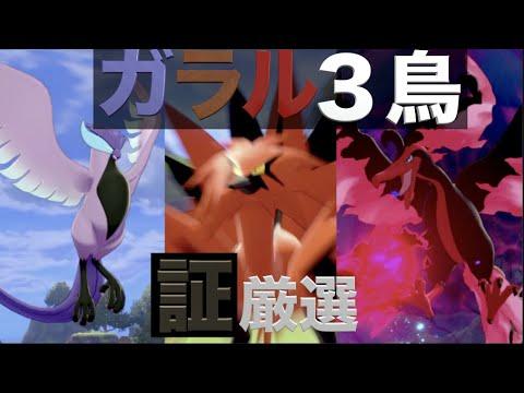 三 厳選 ガラル 鳥