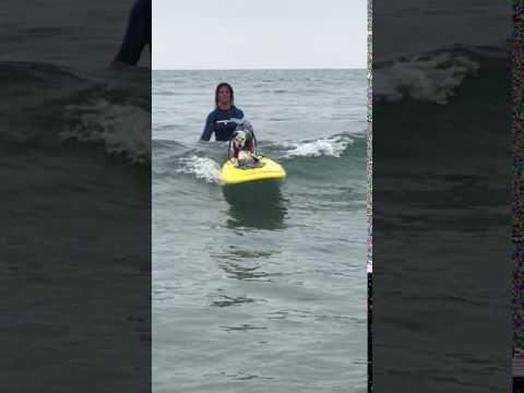 Kalani The Surfing Dog