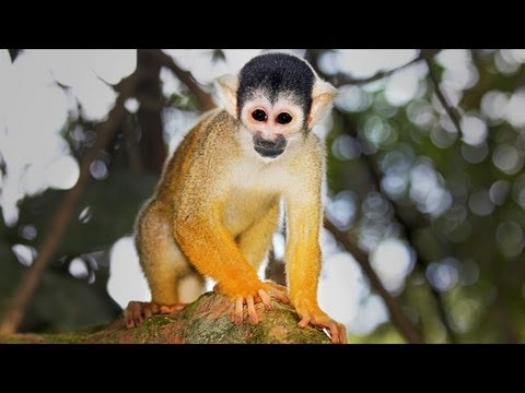 A Tour of the Amazon Rainforest (Green Anacondas, Ghost Planes, and Esperanza Spalding!) Video.