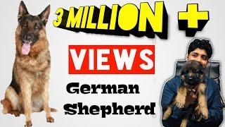 Download German shepherd puppies females 9999/- Mp3 and Videos