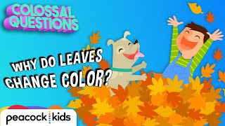 Why Do Leaves Change Color? | COLOSSAL QUESTIONS