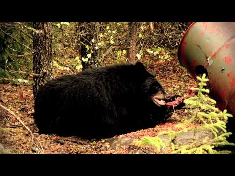 Bear Hunting Magazine's Bear Horizon Episode: Backcountry Bruins In Saskatchewan Pt2