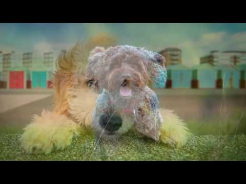 Cockapoo puppy- Top 10 Interesting Facts